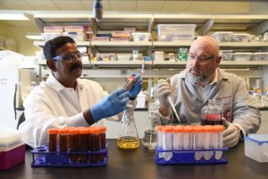 Geoff Schramm works with laboratory coordinator Aftab Ahamed in the Bioproducts, Sciences and Engineering Laboratory at WSU Tri-Cities