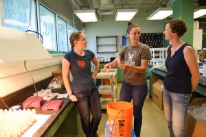 Student Jeannette Lilly (center) works with graduate student Erica Bakker (left) and Sarah Roley, assistant professor of environmental science, in an environmental science lab as part of her Chancellor's Summer Scholars experience.
