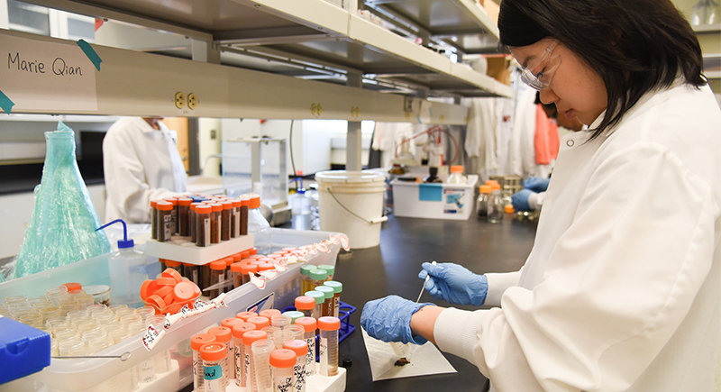 A graduate student works in the Bioproducts, Sciences and Engineering Laboratory at WSU Tri-Cities