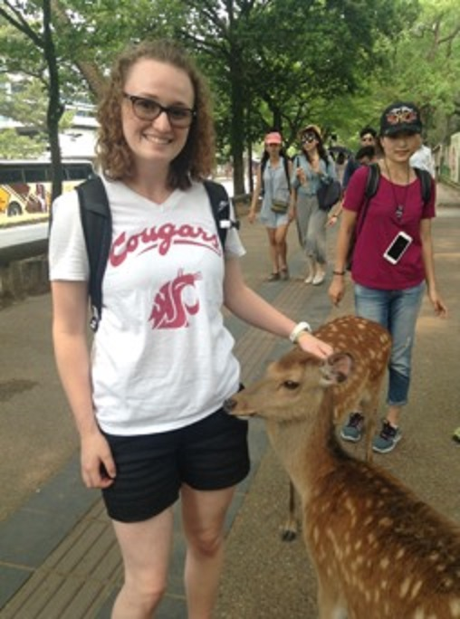 Deer park in Japan