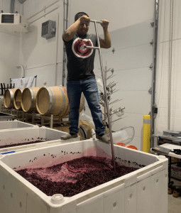 Perez in Kennewick at Palencia Wine Co. where he produced the the 2018 Sangiovese for WSU